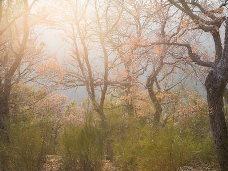 Fantasmi e memorie di un paesaggio.
