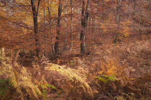 Autumn 77