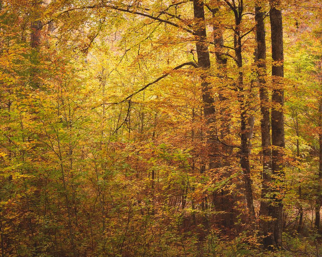 Autumn62