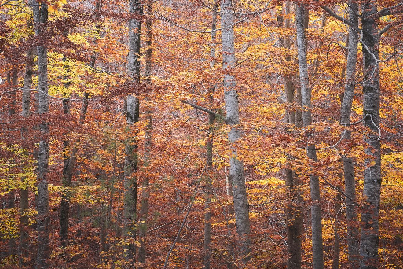 Autumn84
