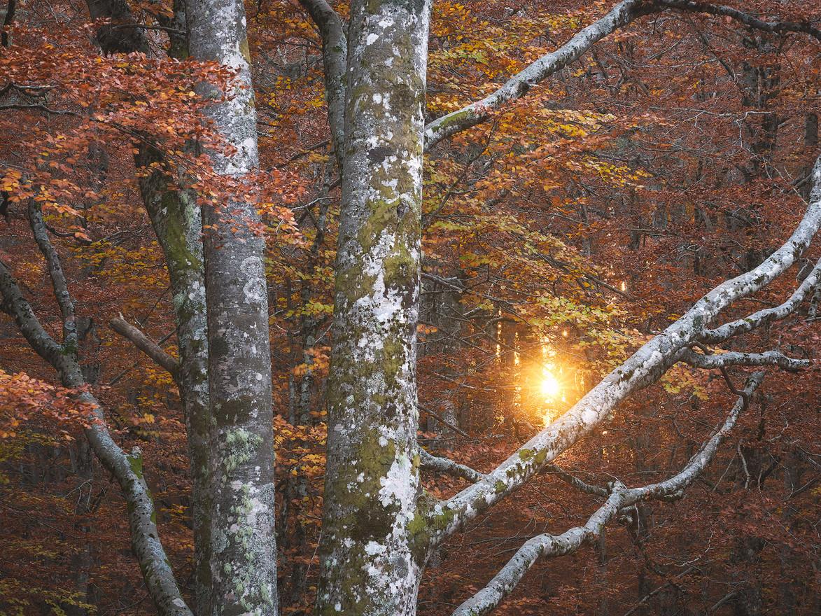 Autumn95