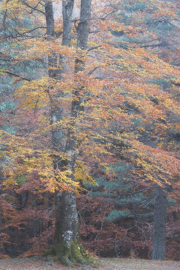 Autumn92