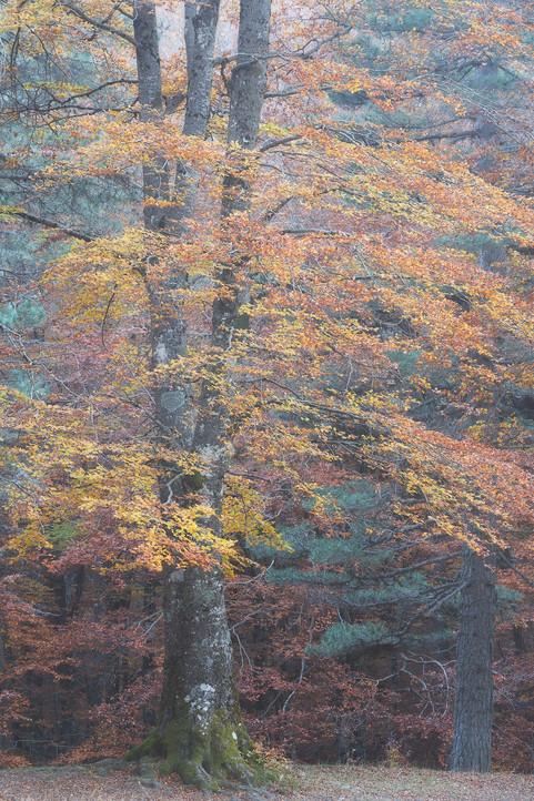 Autumn 92