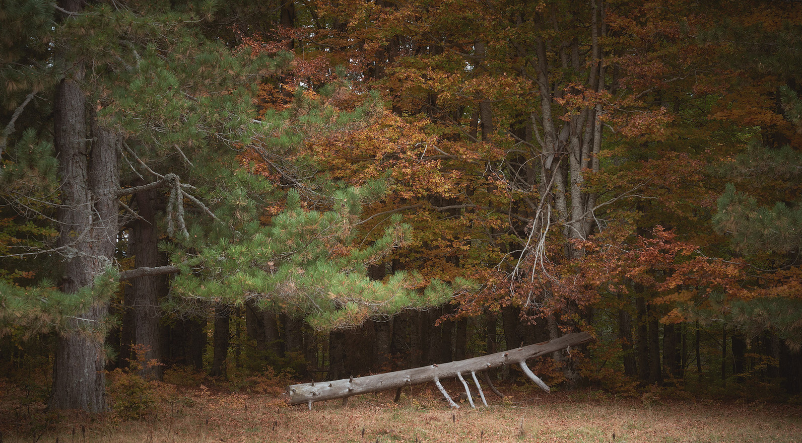 Autumn63