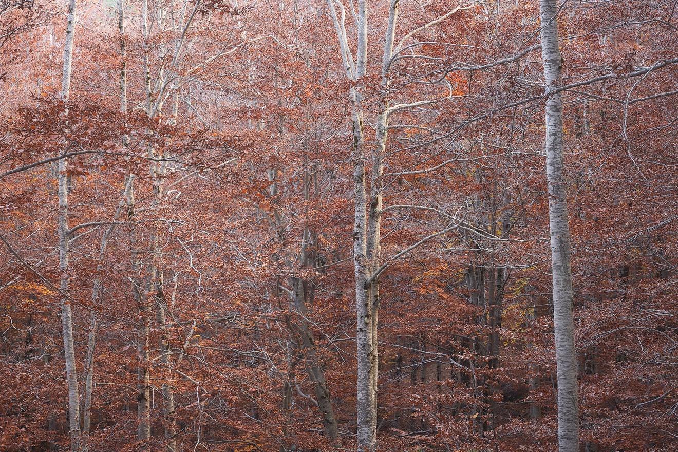Autumn80