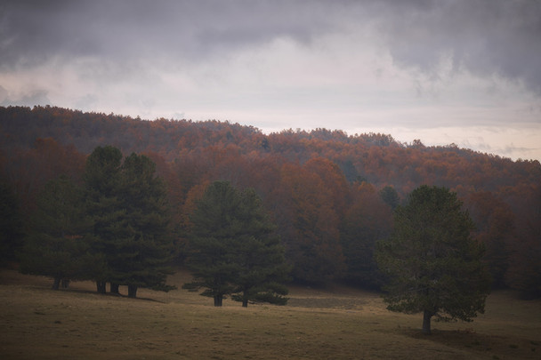 Autumn 56
