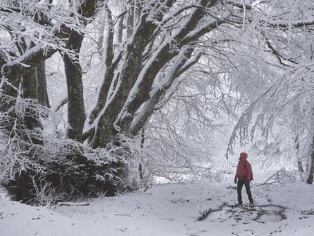 Alberi monumentali nel Parco Nazionale della Sila - Monumental trees in the Sila National Park