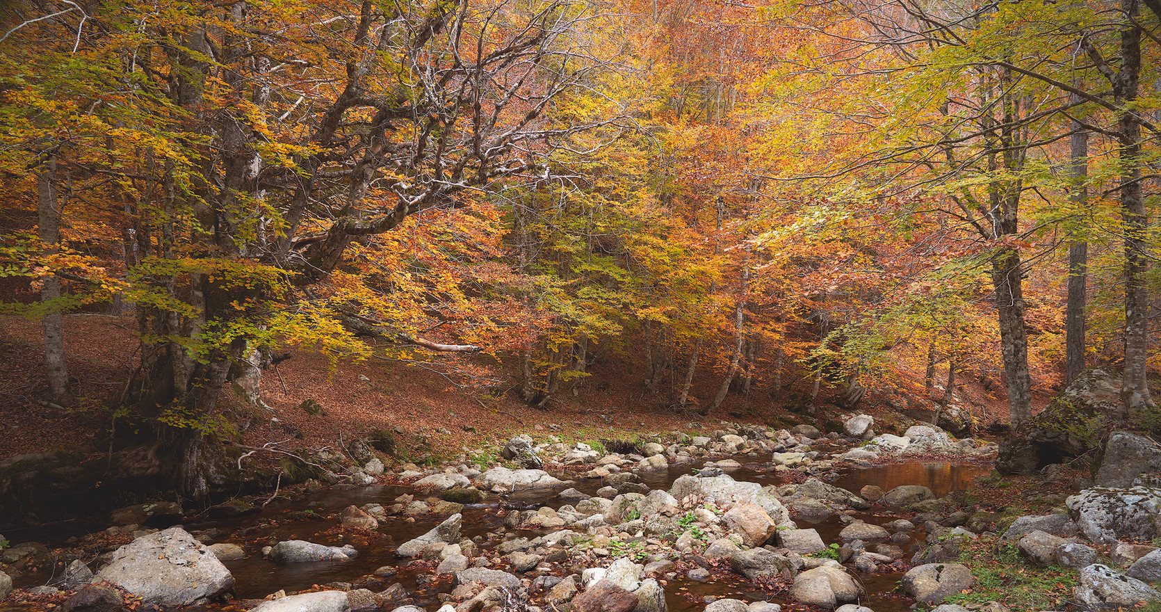 Autumn88