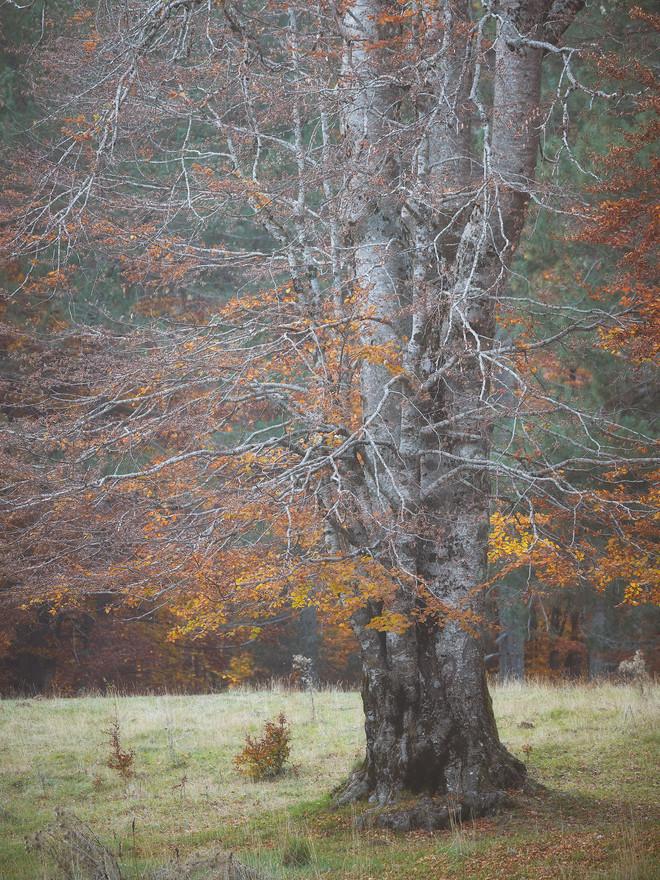 Autumn94