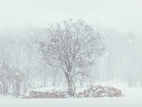 """Photographic stories: """"Heiner Machalett - Family and Nature"""""""
