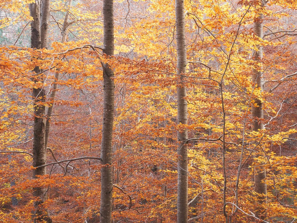 Autumn91