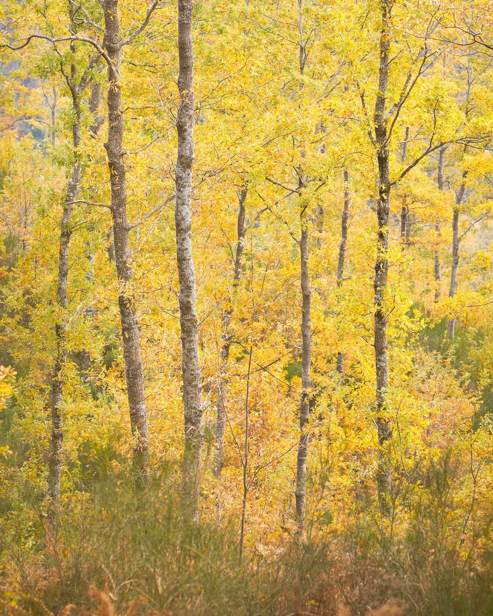 Autumn plots