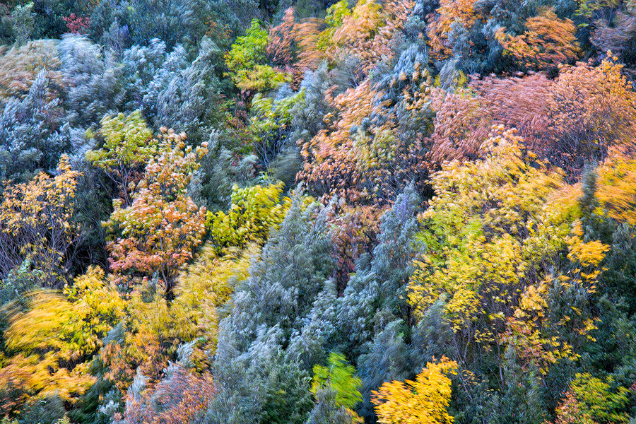Autumnal-Pixel.jpg