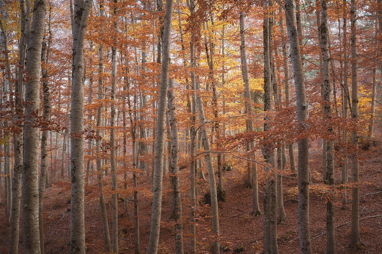 Autumn97