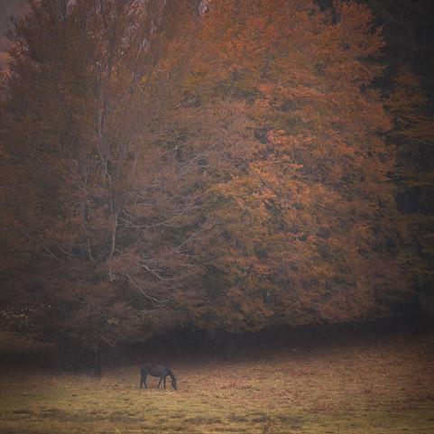 Autumn 32