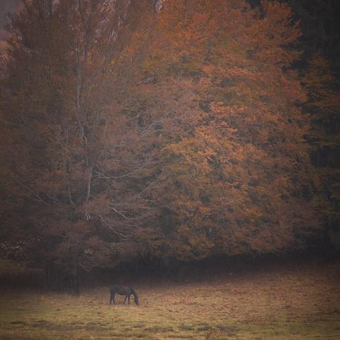 Autumn32