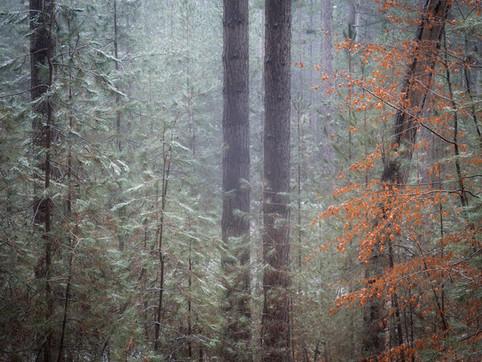 Racconto invernale