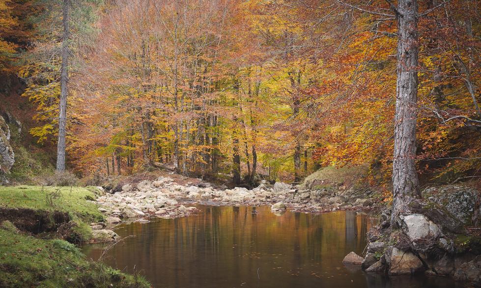 Autumn 35