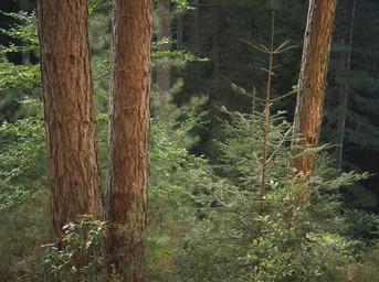 Summer's wood