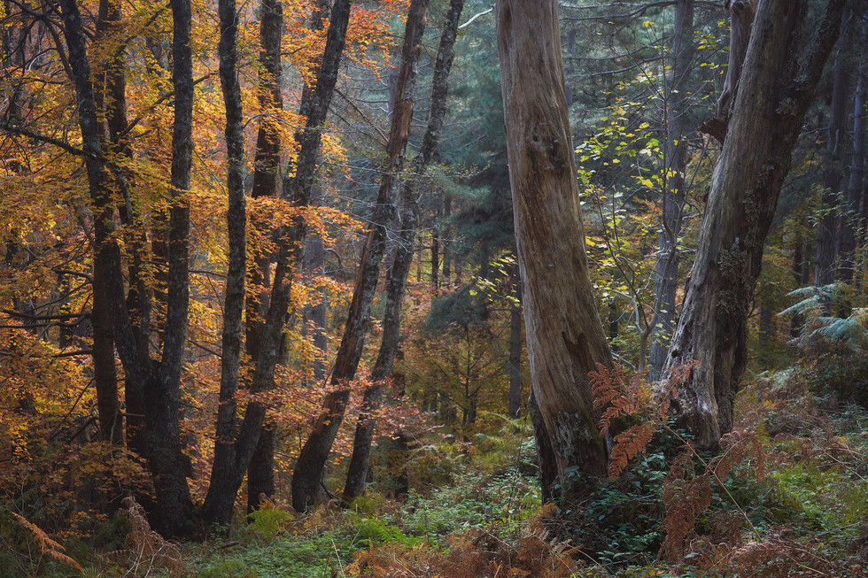 Autumn 121