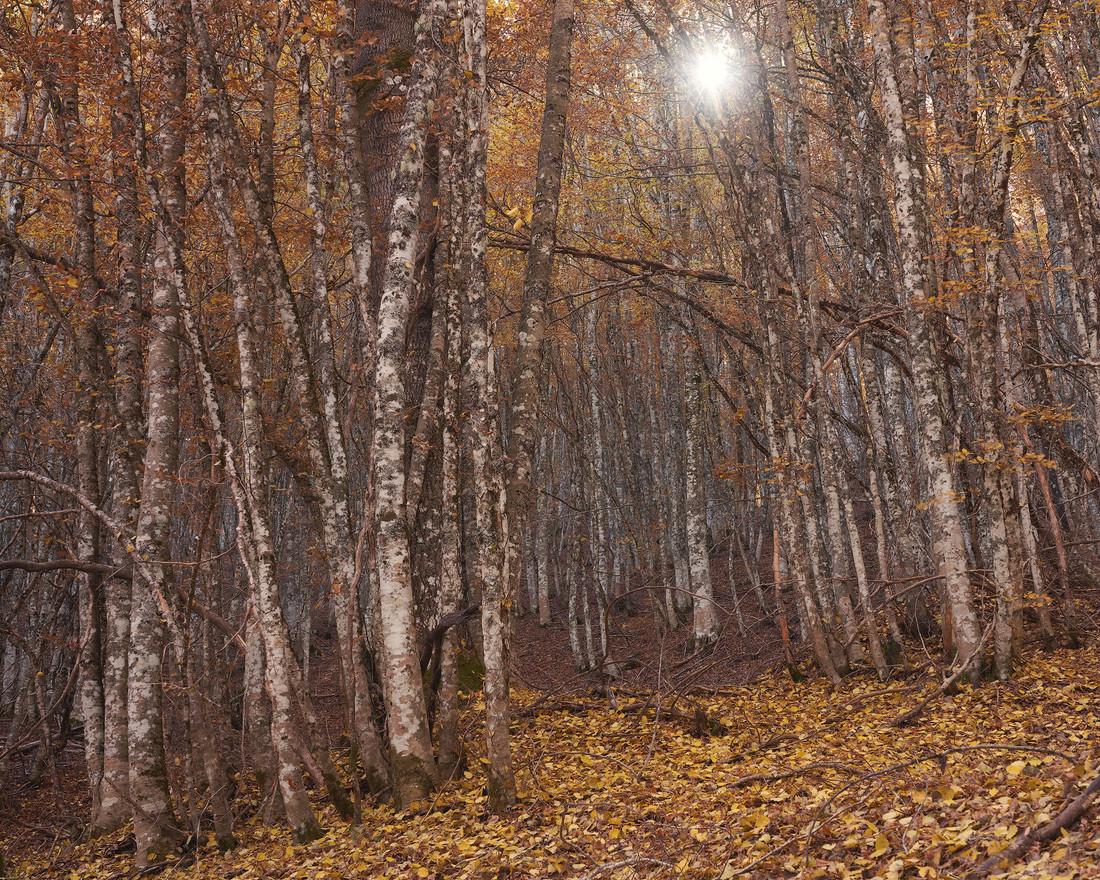 Autumn69