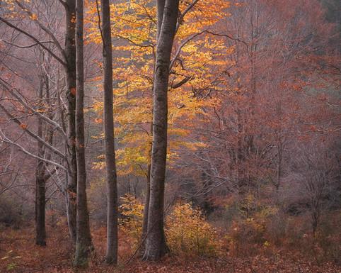Autumn131