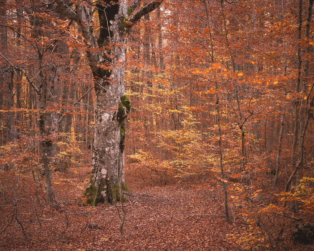 Autumn99
