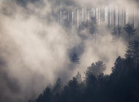 Foreste della Sila