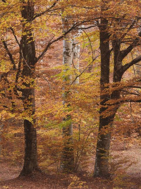 Autumn 96