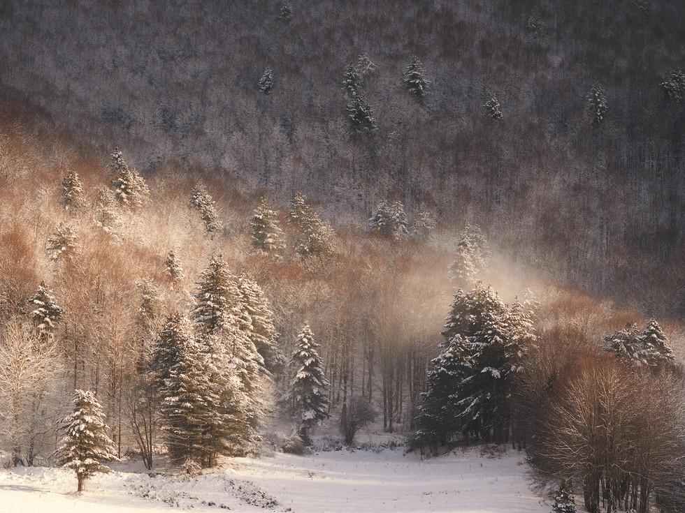 Winter76