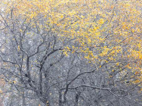 Gli alberi nelle mie fotografie