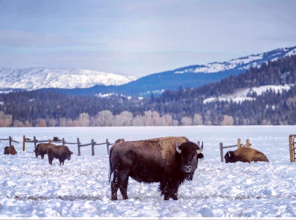 'Roam', Jackson Hole, Wyoming