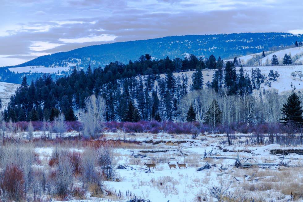 'Valley of Hope', Jackson Hole, Wyoming
