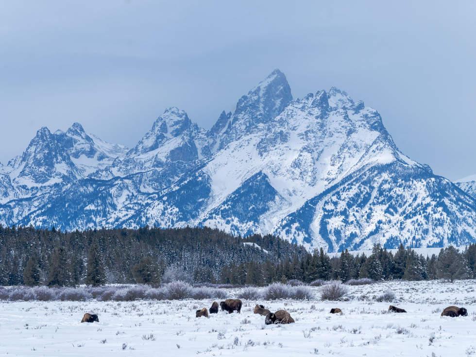 'Wild Game', Jackson Hole, Wyoming