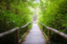 walk way into rain forest, inthanon moun
