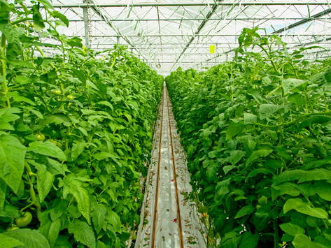 Robot for Scouting Plants in Greenhouses