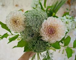 Blooms  @_loveandlacebridalsalon ✨🌿