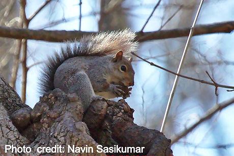 eastergraysquirrel-2016-02-27_edited.jpg