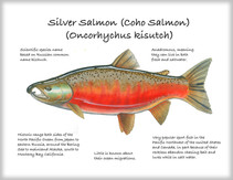 Silver-Salmon.jpg