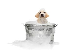 PUPPY BATH.jpg