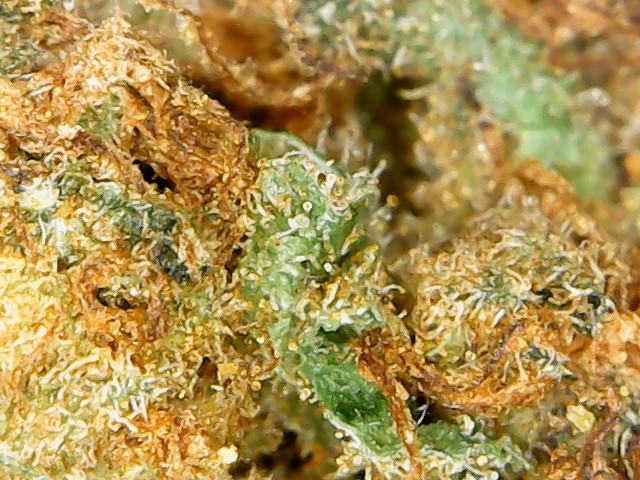 plant4 week6 mfspray