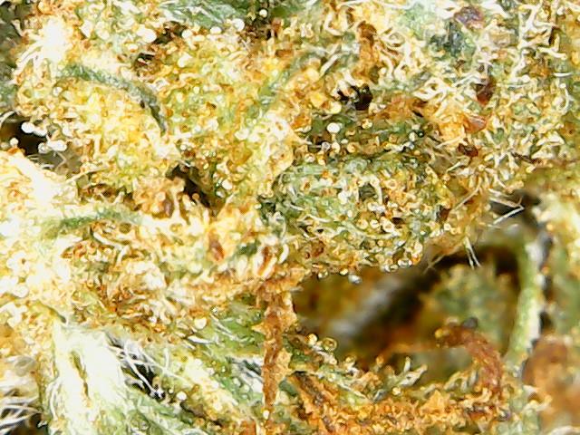 plant2 week6 mfspray