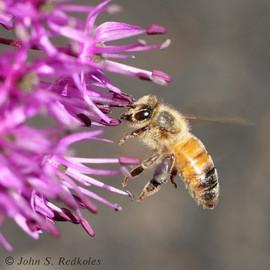 Pulling Pollen