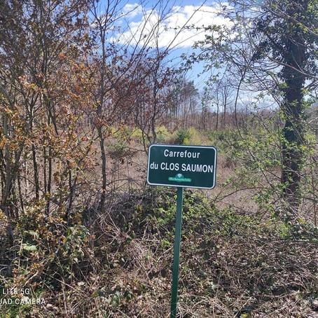 8 Avril - Forêt de Montargis