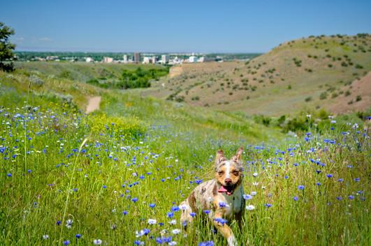 Foothill Dog.jpg