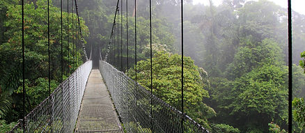 Rainforest Suspension Bridge