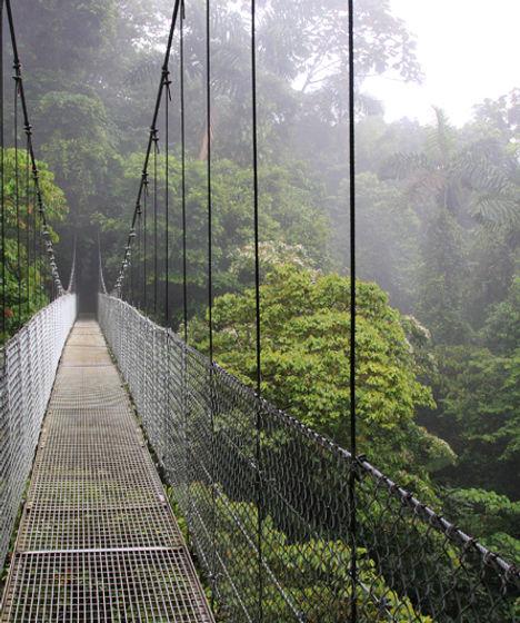 pont, e2cm alliance, tropique