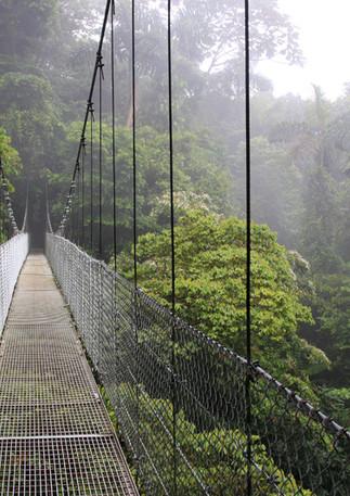 Regenwald Hängebrücke
