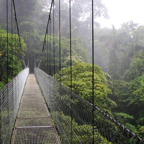 Regenwald-Hängebrücke