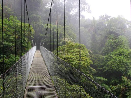 Panamá: ¿Qué es la visa de reforestación y por qué deberías considerarla?
